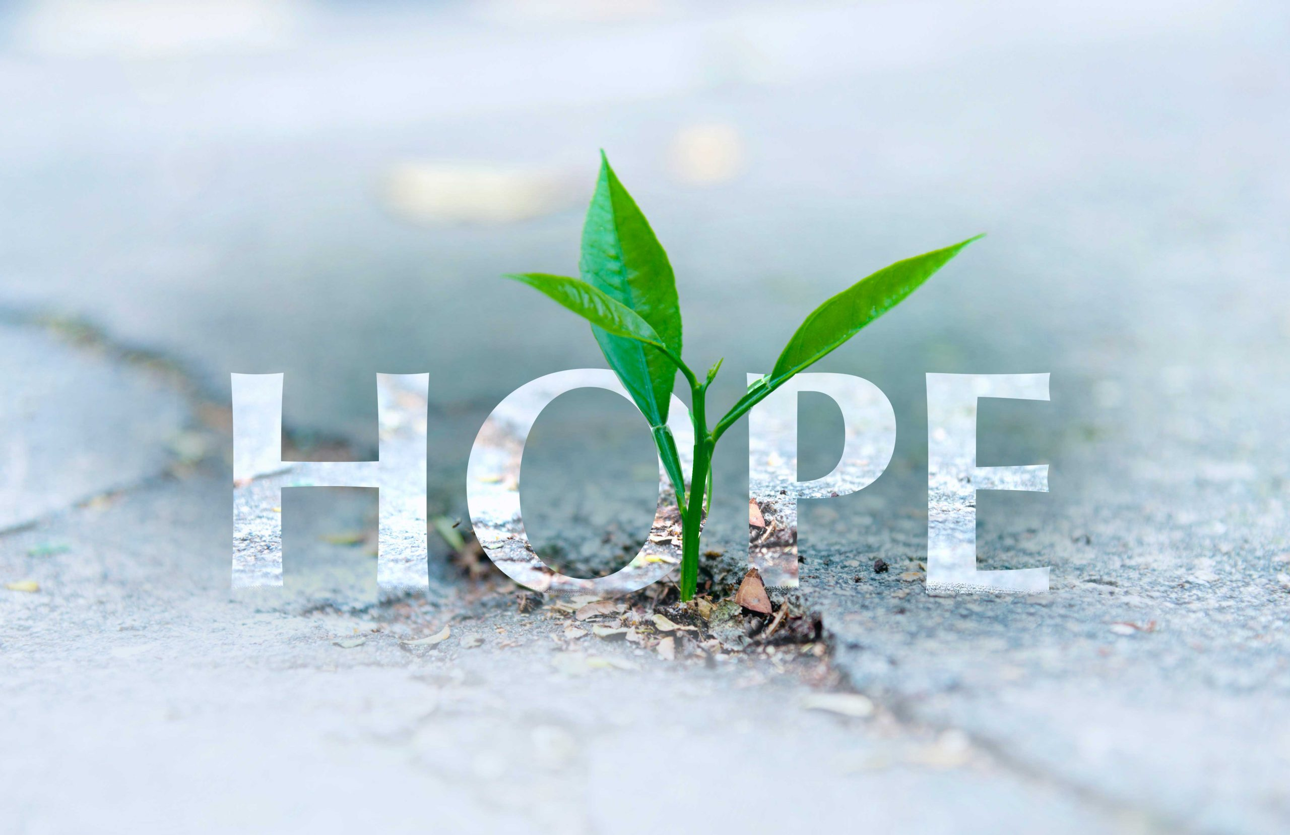 Hope: The 3 Things needed to Grow and Thrive