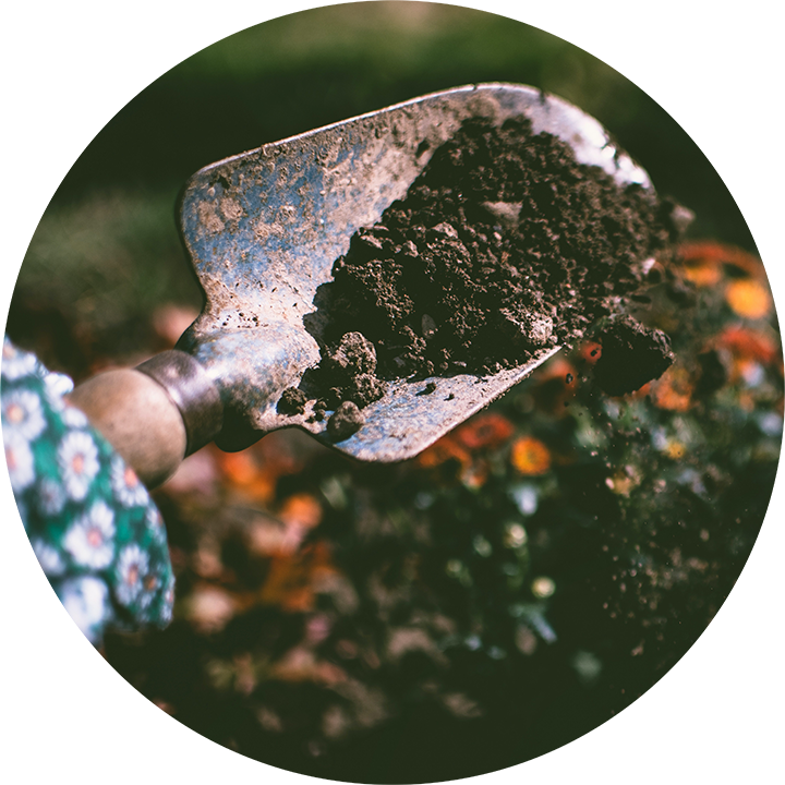 Soil That Plants Need to Grow