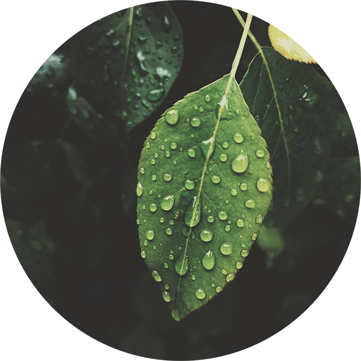 Plant Leave with Some Water Droplets